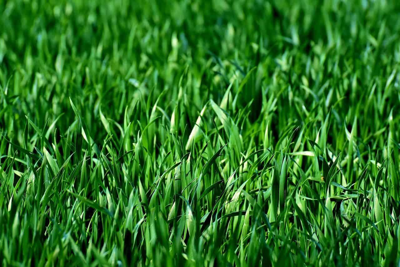 Den Rasen auf einen trocknen Sommer vorbereiten