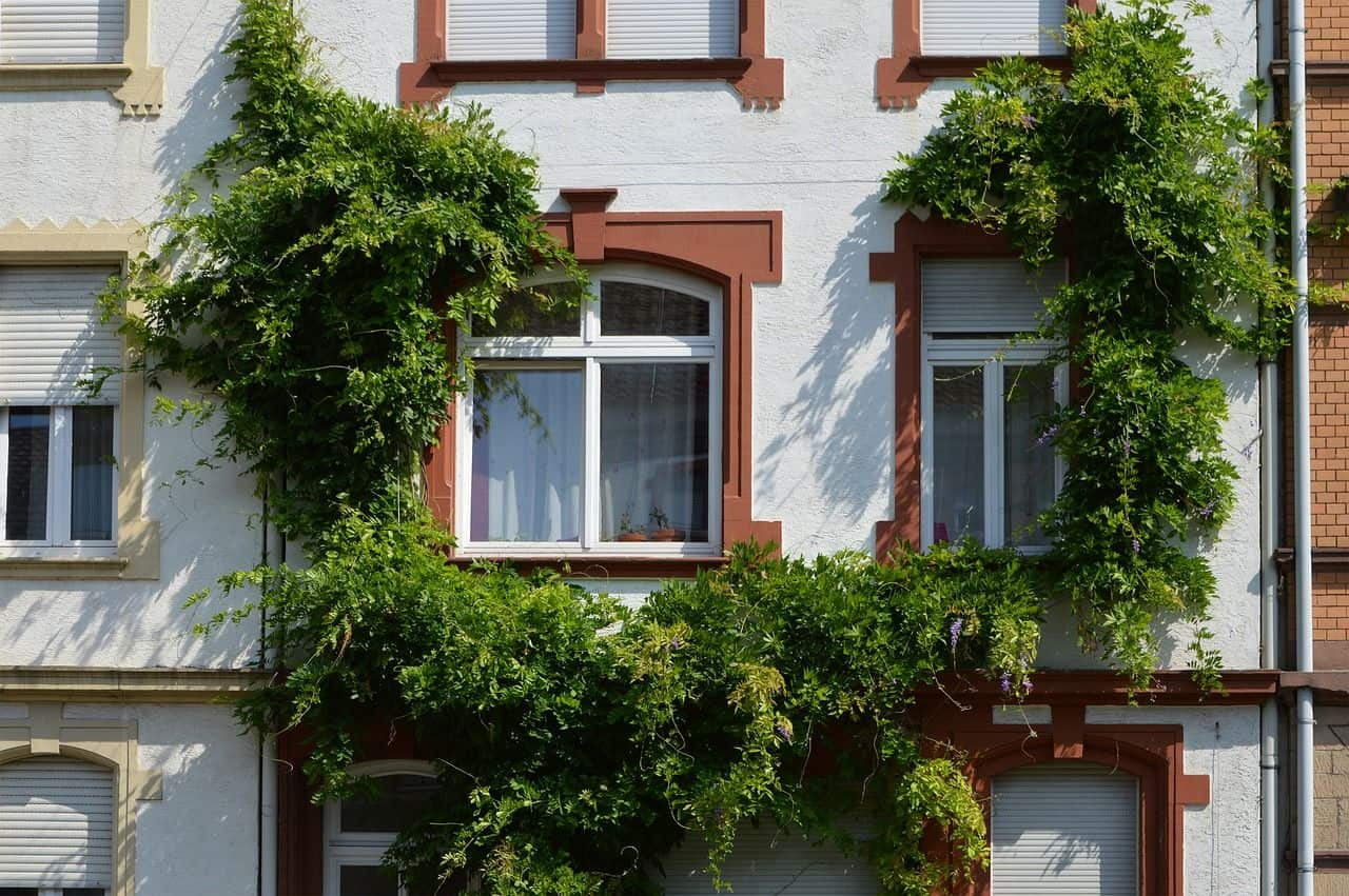 Hausfassade mit Wildem Wein