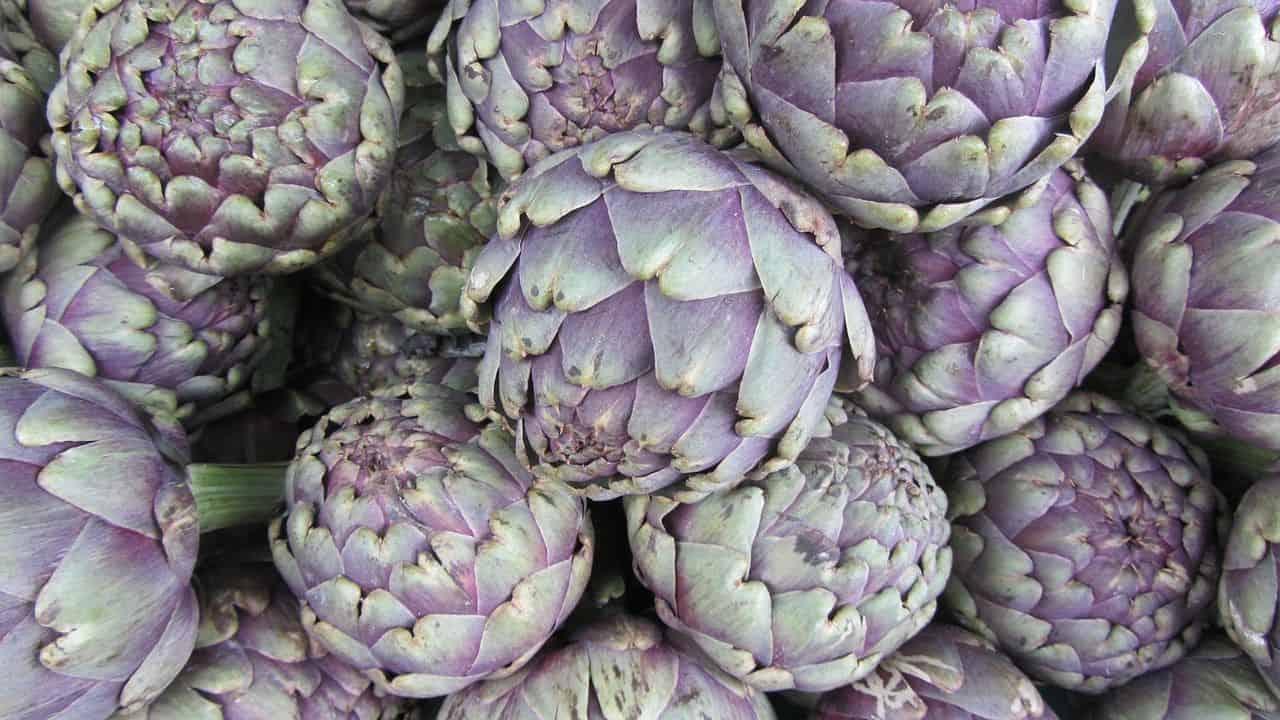 Artischocken – ein Gemüse mit 2000-jähriger Geschichte