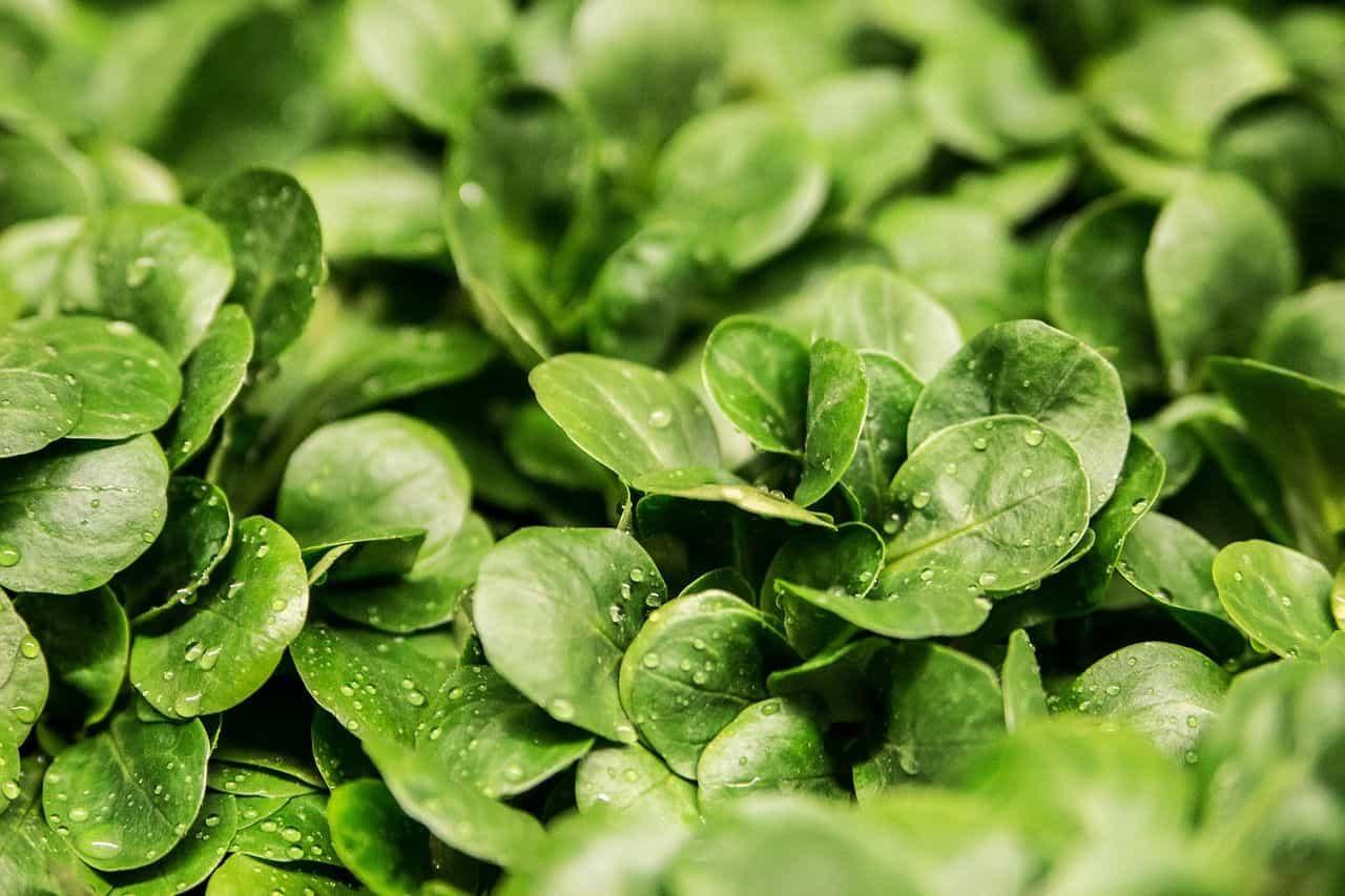 Read more about the article Wintersalate – vitaminreiche Kost für die kalte Jahreszeit