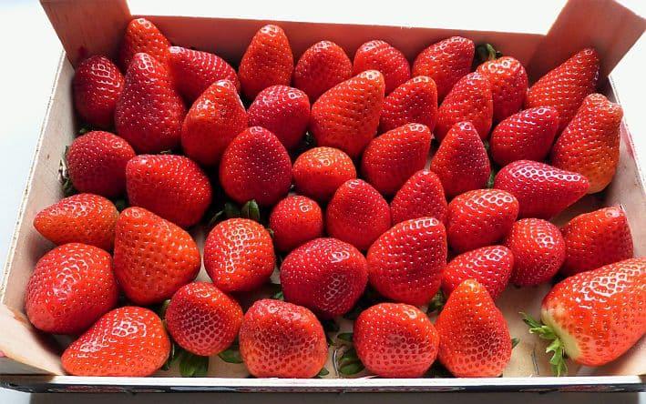 Erdbeeren (2)