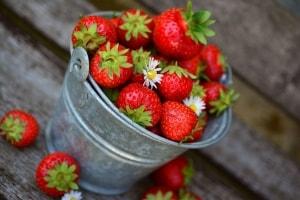 Gesunde Erdbeeren ernten