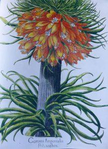 Hortus Eystettensis – der Garten von Eichstätt