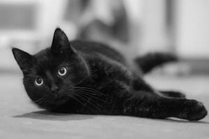 Katzen lieben Kräuter – vegetarische Genüsse