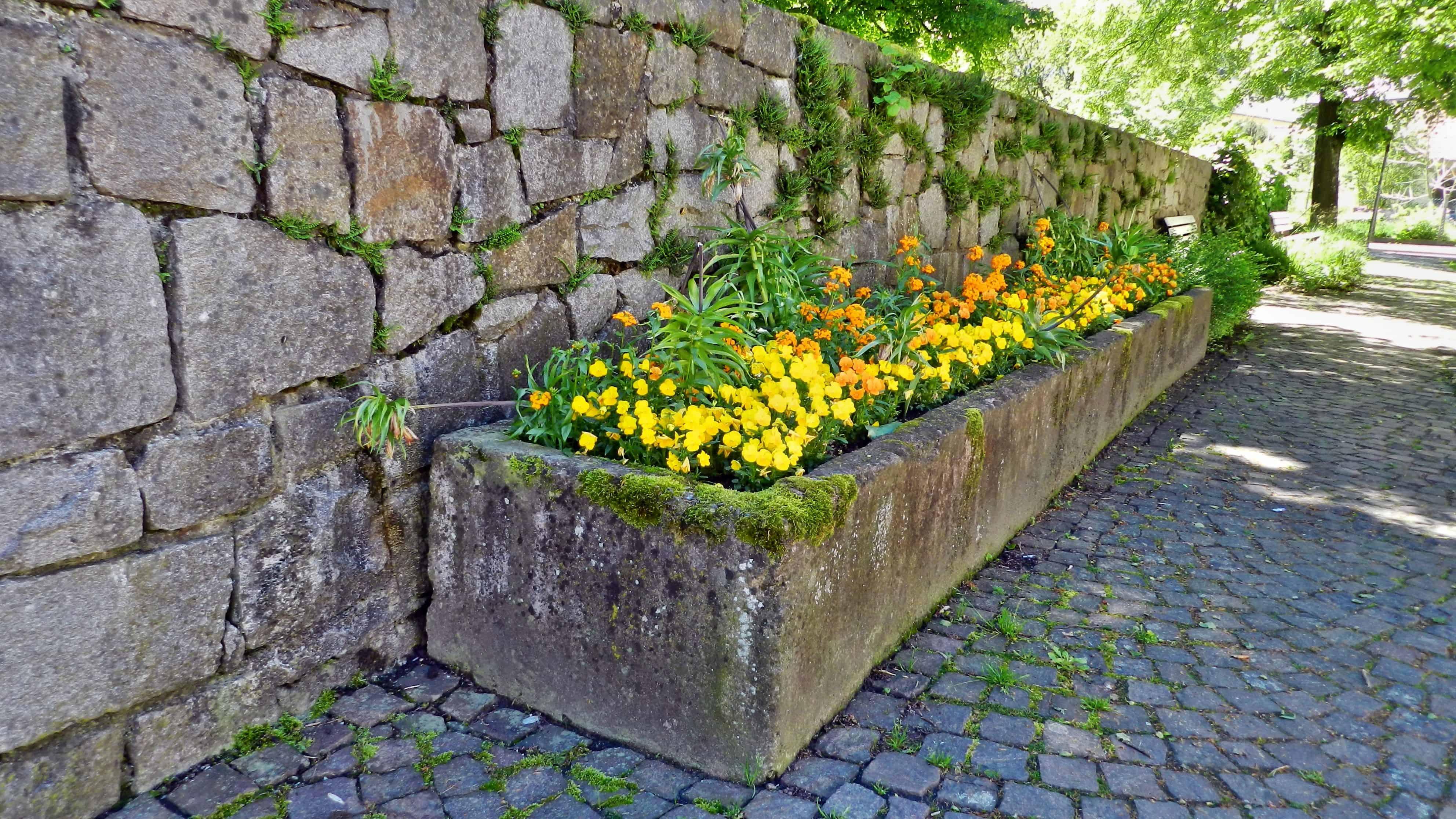 Ein Steintrog mit Pflanzen
