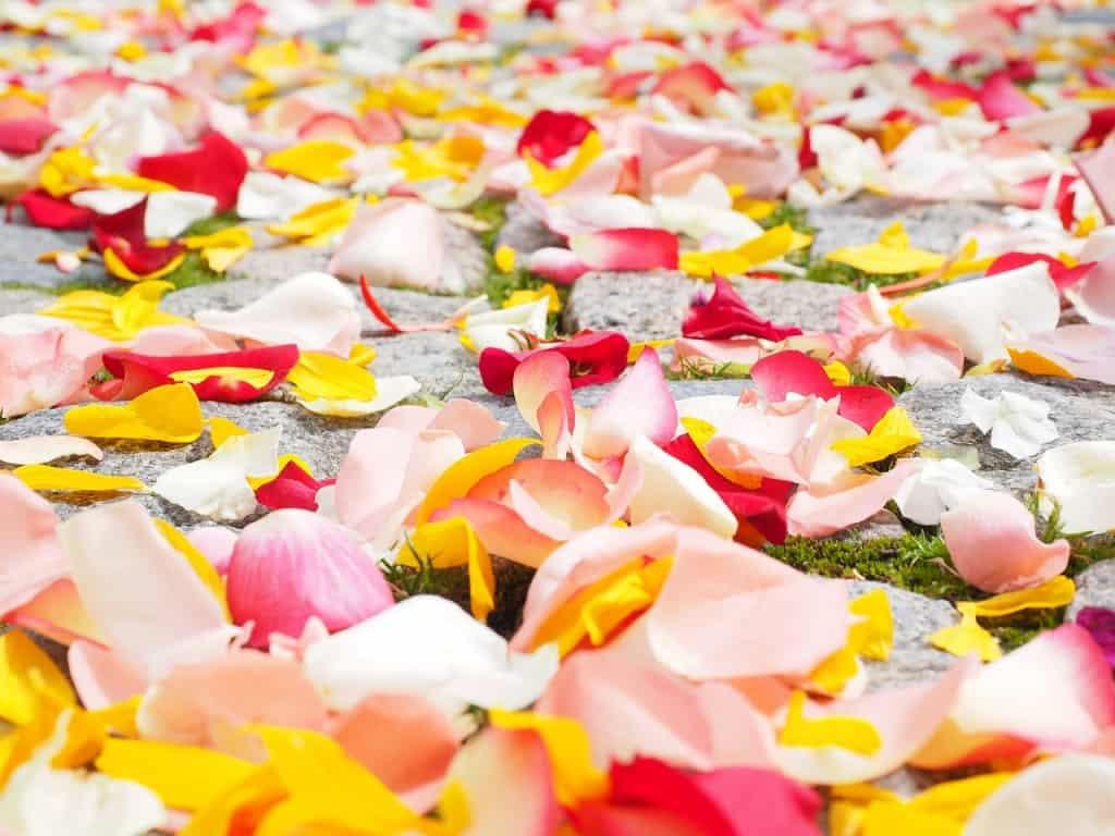 Mehrfarbige Rosenblätter