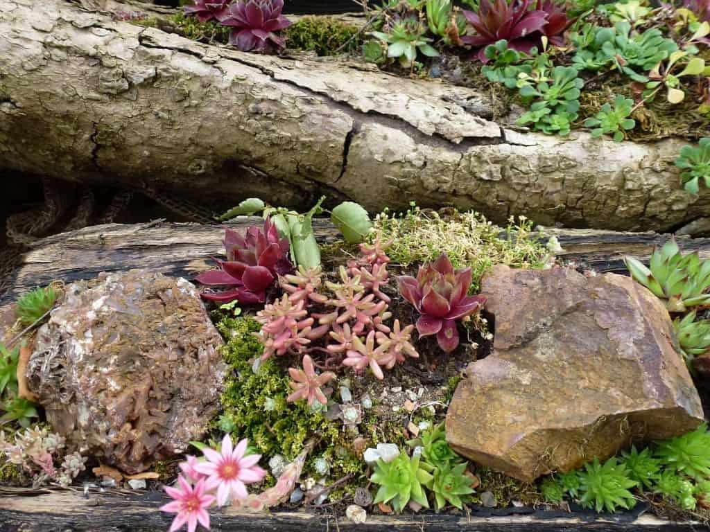 Blühende Pflanzen in einem Steingarten