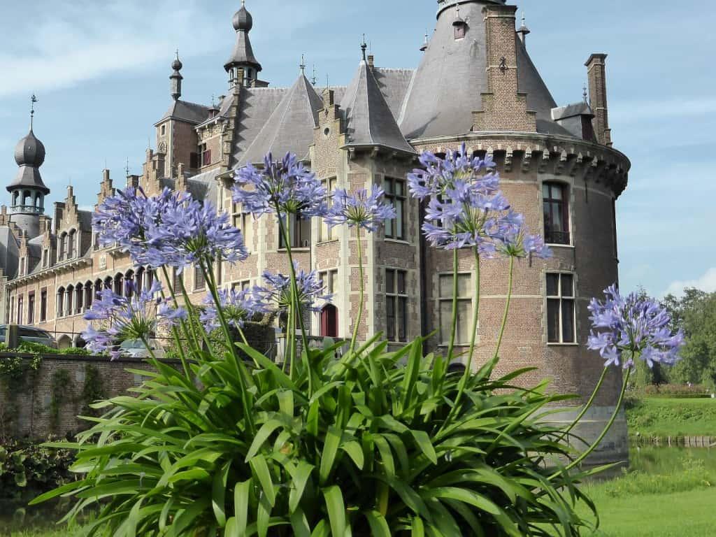 Eine blühende Agaphanthus-Pflanze vor einem Schloss