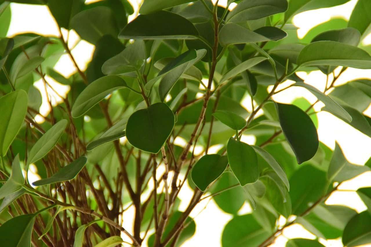 Mit Erfolg Zimmerpflanzen vermehren
