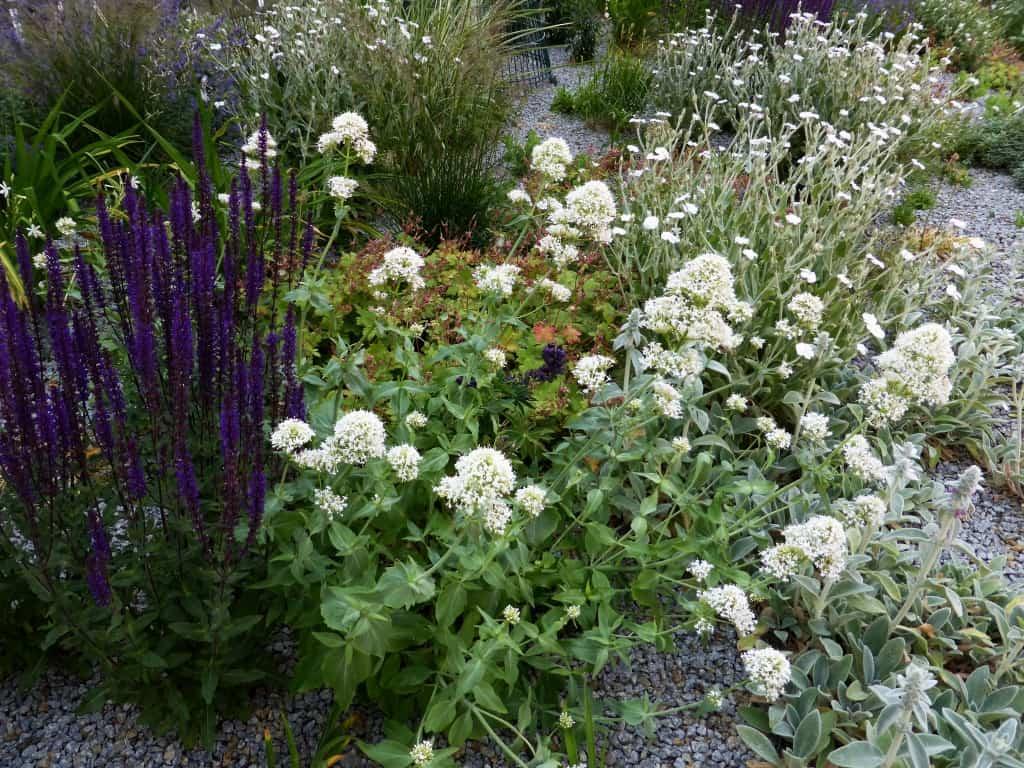 Ein Kiesgarten mit verschiedenen Pflanzen