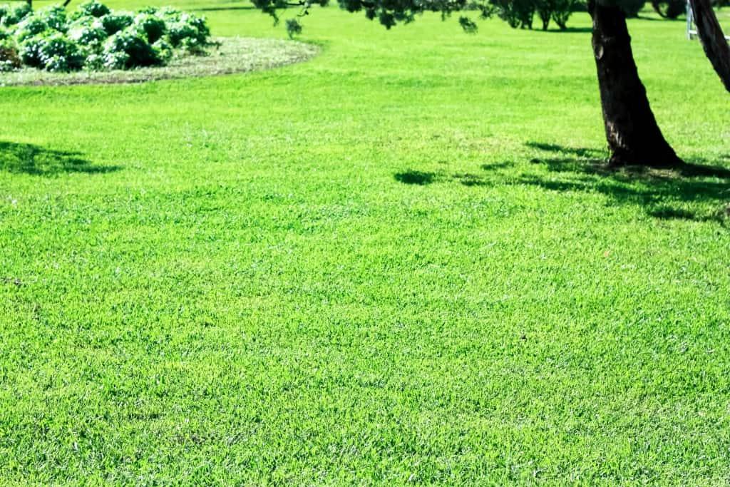 Eine gepflegte Rasenfläche