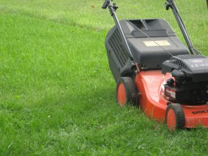 Wann darf man eigentlich Rasenmähen?