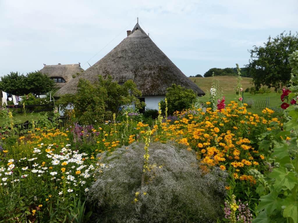Bauerngarten mit Margeriten, Sonnenauge, Schleierkraut