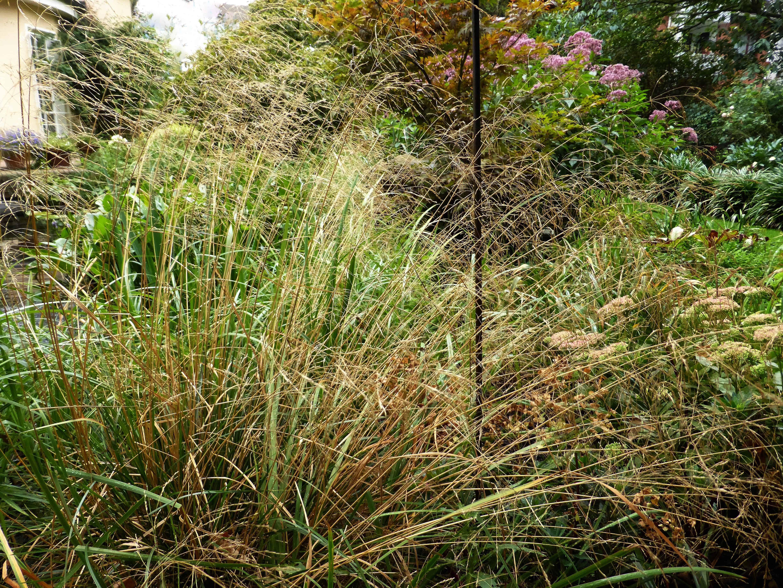 Ziergräser – das große Finale im Herbst