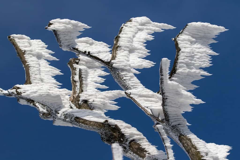 Gefrorener Schnee an einem Ast