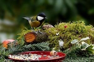 Vögel füttern im Winter – die wichtigsten Tipps