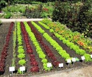 Die richtige Aussaat im Gemüsebeet
