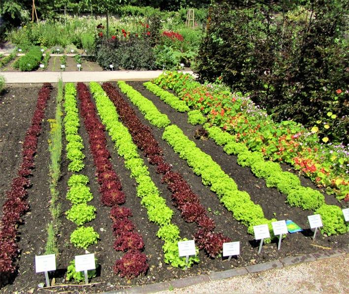 Ein Gemüsebeet mit verschiedenen Nutzpflanzen