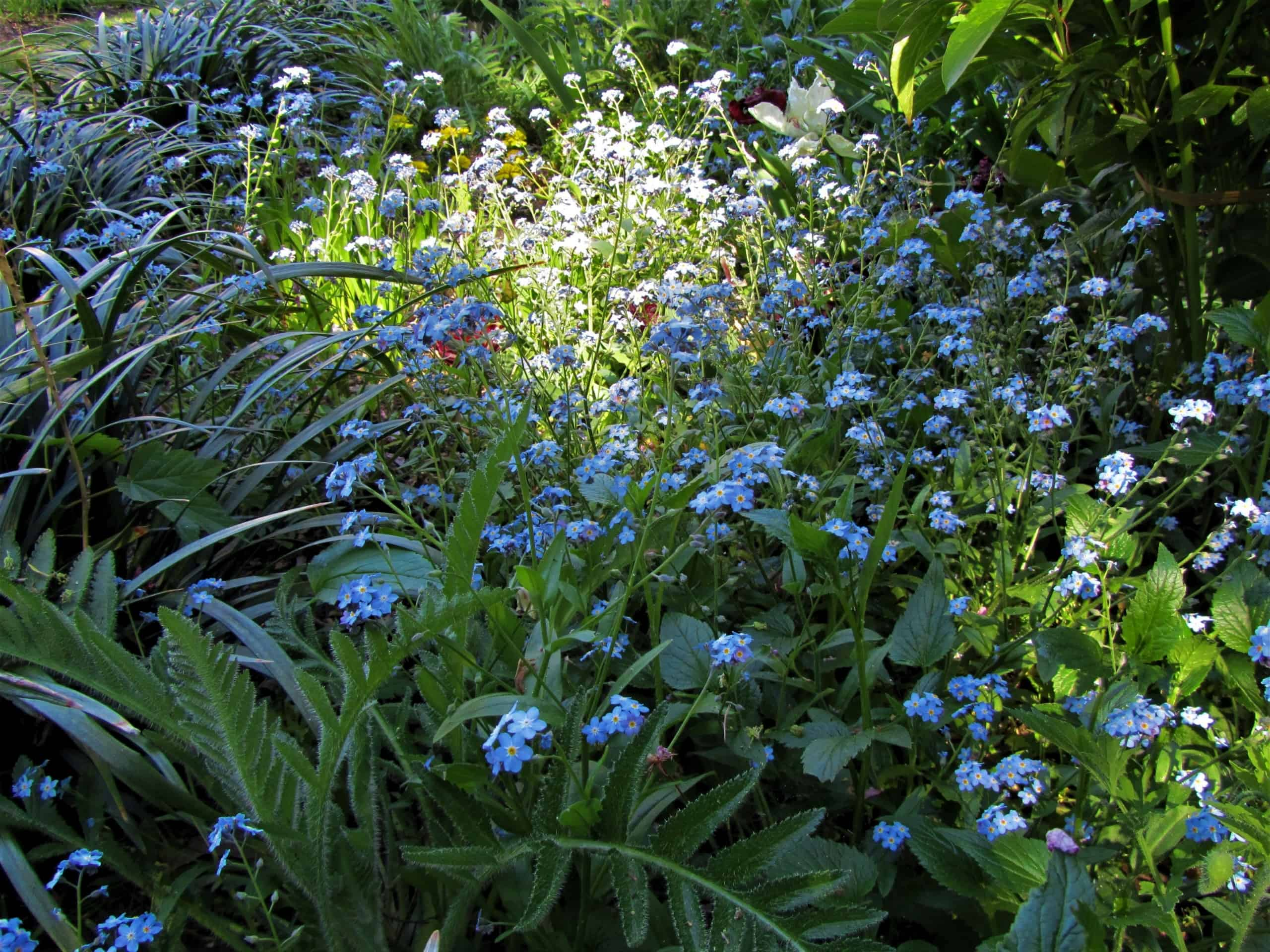 Read more about the article Frühling lässt sein blaues Band…