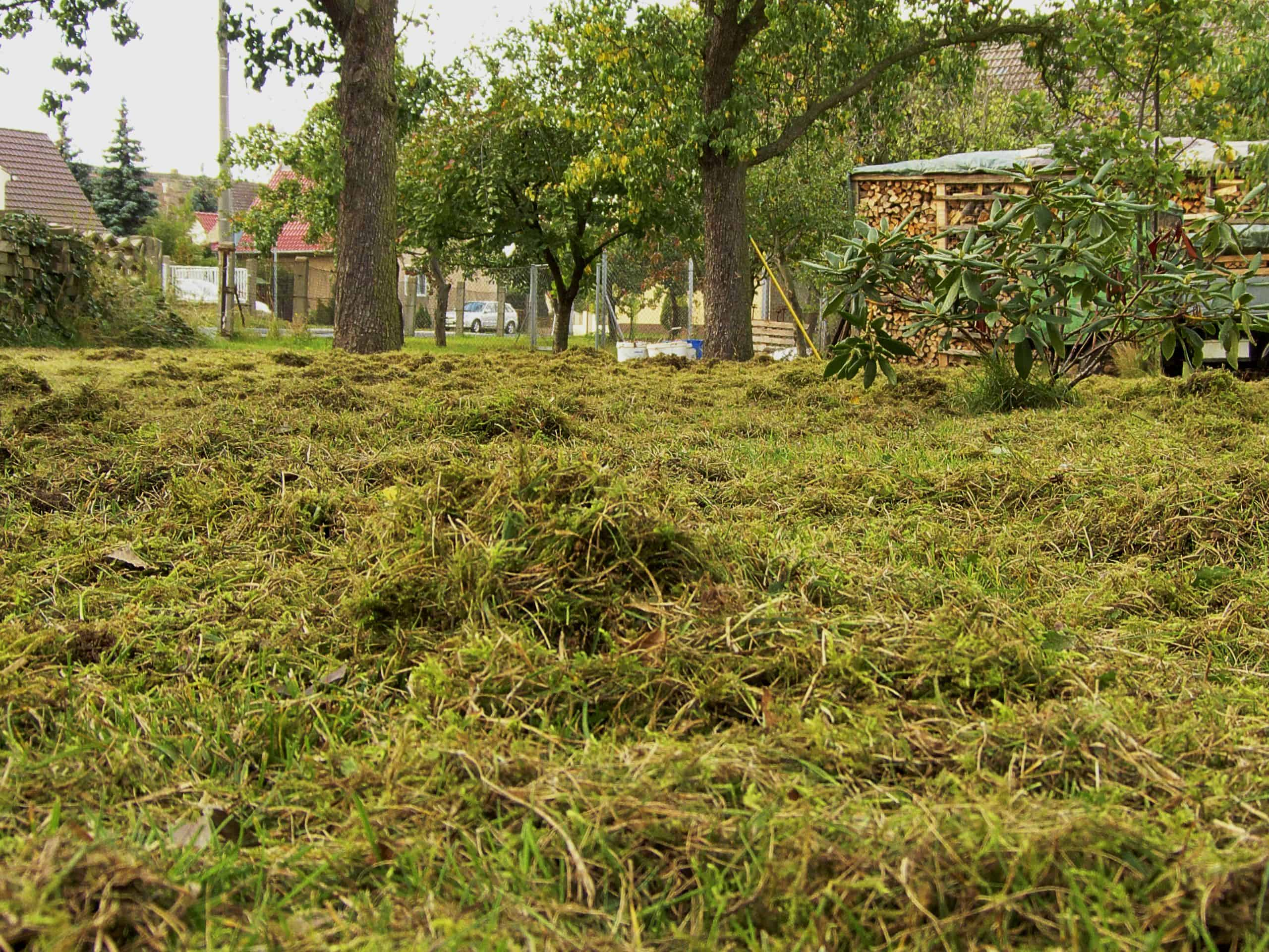 Read more about the article Ein gepflegter Rasen durch richtiges Vertikutieren