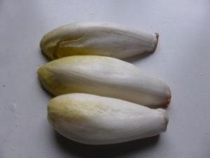 Chicorée – Ernte aus eigenem Anbau