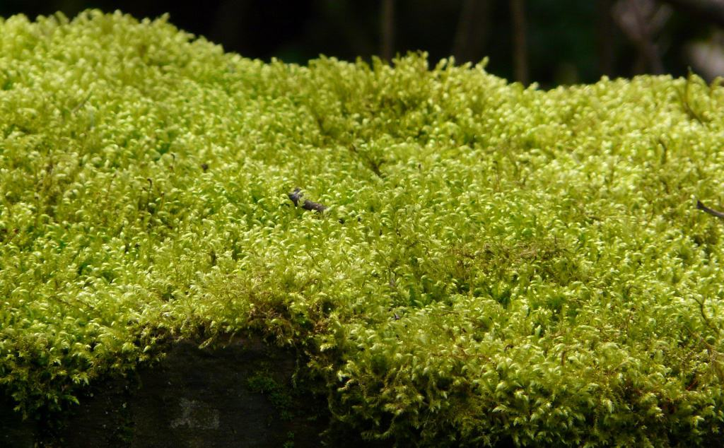Ein Placken grünes Moos