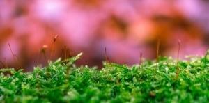 Moos im Rasen dauerhaft loswerden