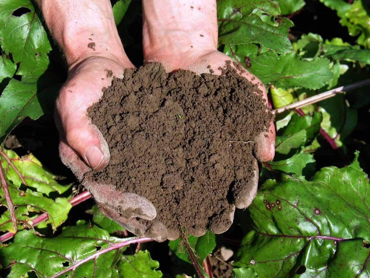 Der Mutterboden – Grundlage des pflanzlichen Lebens