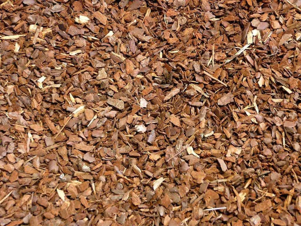 Pinienrinde – das perfekte Mittel zum Mulchen