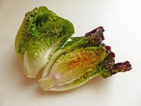 Ein aufgeschnittener Romana-Salat