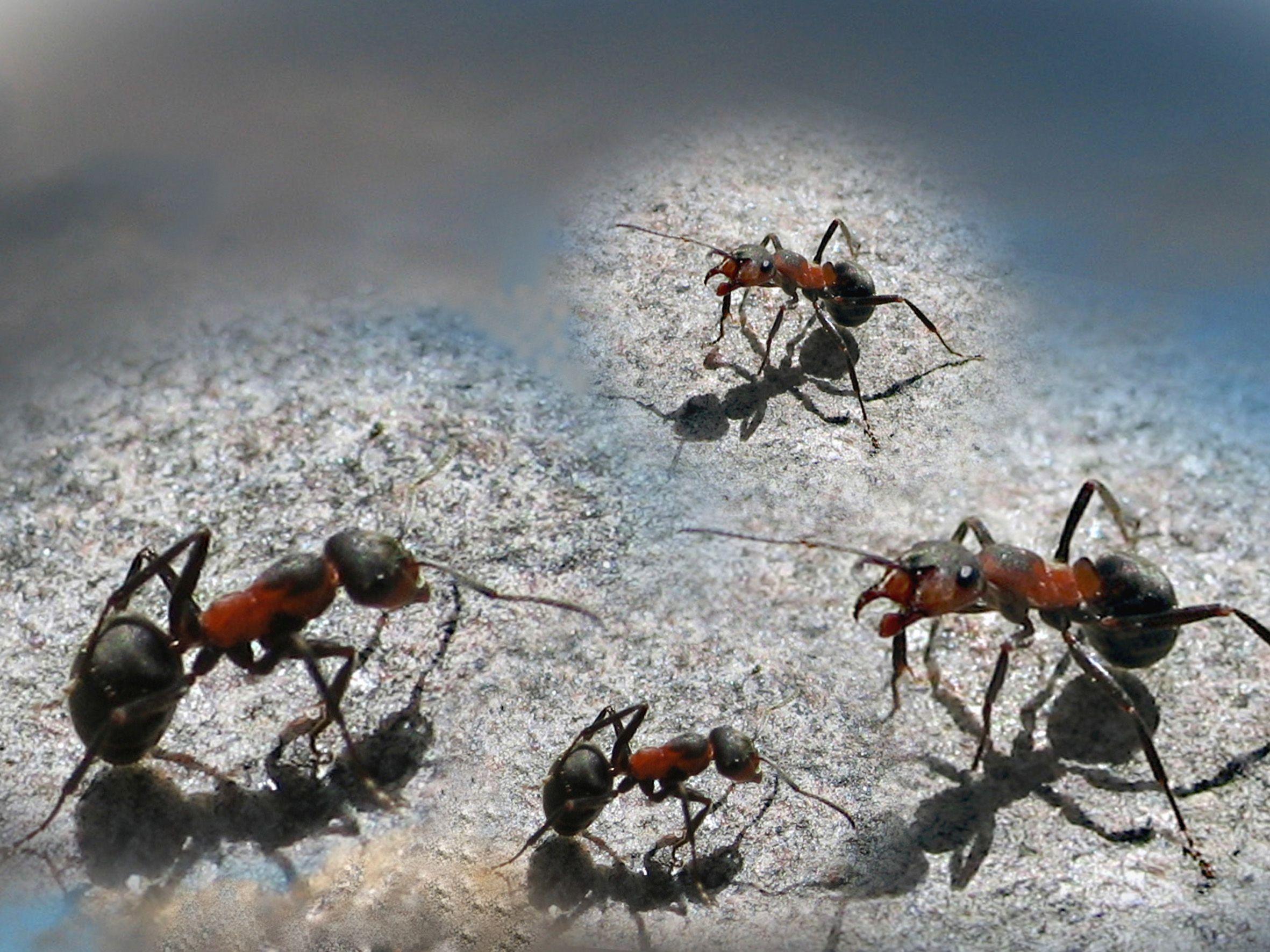 Ameisen mit Hausmitteln aus dem Haus vertreiben