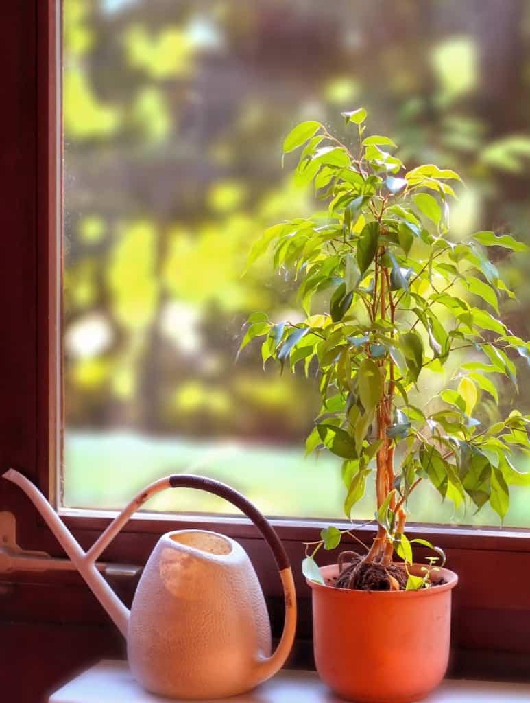 die besten pflanzen f r das schlafzimmer nachgeharkt. Black Bedroom Furniture Sets. Home Design Ideas