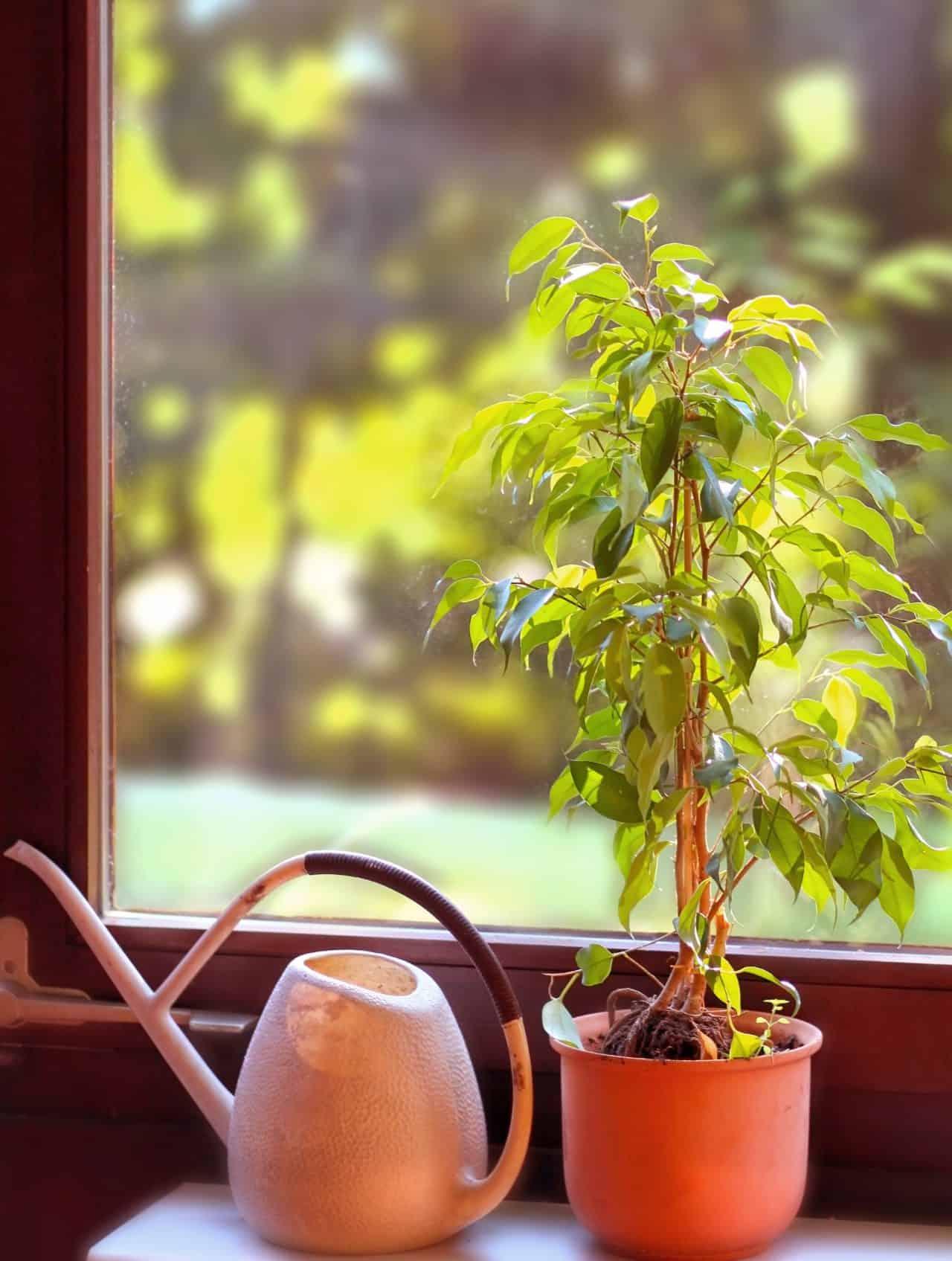 pflanzen f r tr ge pflanzen und tr ge balkonkasten mit blumen leipziger steingarten stauden. Black Bedroom Furniture Sets. Home Design Ideas