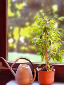 Die besten Pflanzen für das Schlafzimmer
