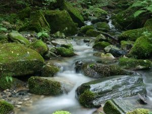 Einen Bachlauf anlegen – Wasser im Garten