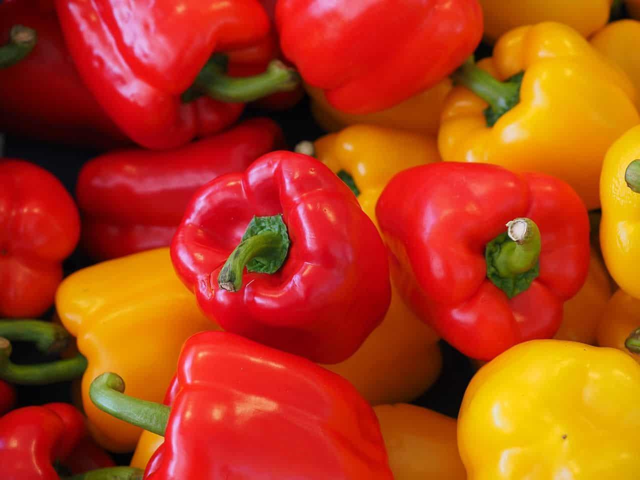 Paprika richtig ernten