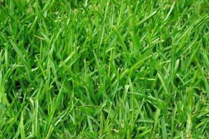 Grün ist nicht gleich Grün – die verschiedenen Rasensorten