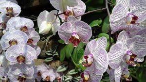 Die wichtigsten Regeln in der Orchideenpflege