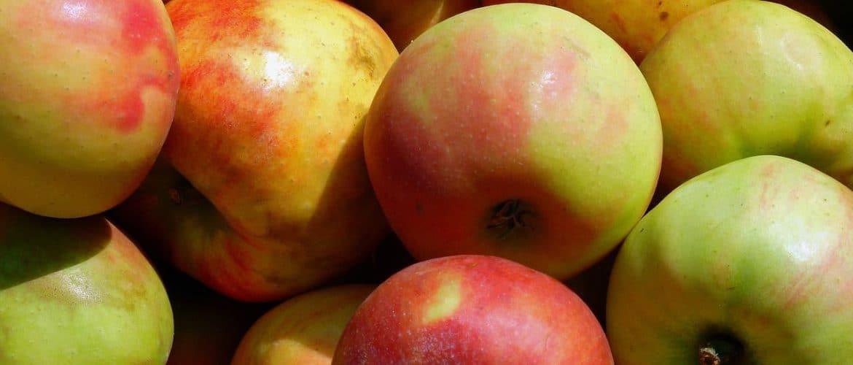 Bospkop-Äpfel auf einem Haugfen