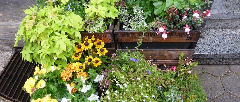 Blühende Pflanzen in Weinkisten