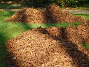Die wichtigsten Gartenarbeiten im Herbst