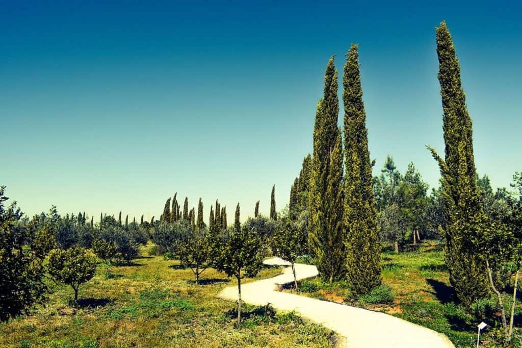 Zypressen in einer mediterranen Landschaft