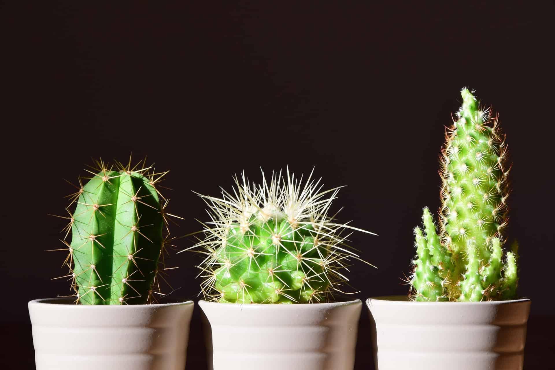 die richtige pflege der wichtigsten zimmerpflanzen nachgeharkt. Black Bedroom Furniture Sets. Home Design Ideas