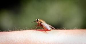 Stechmücken bekämpfen und Stiche schnell auskurieren