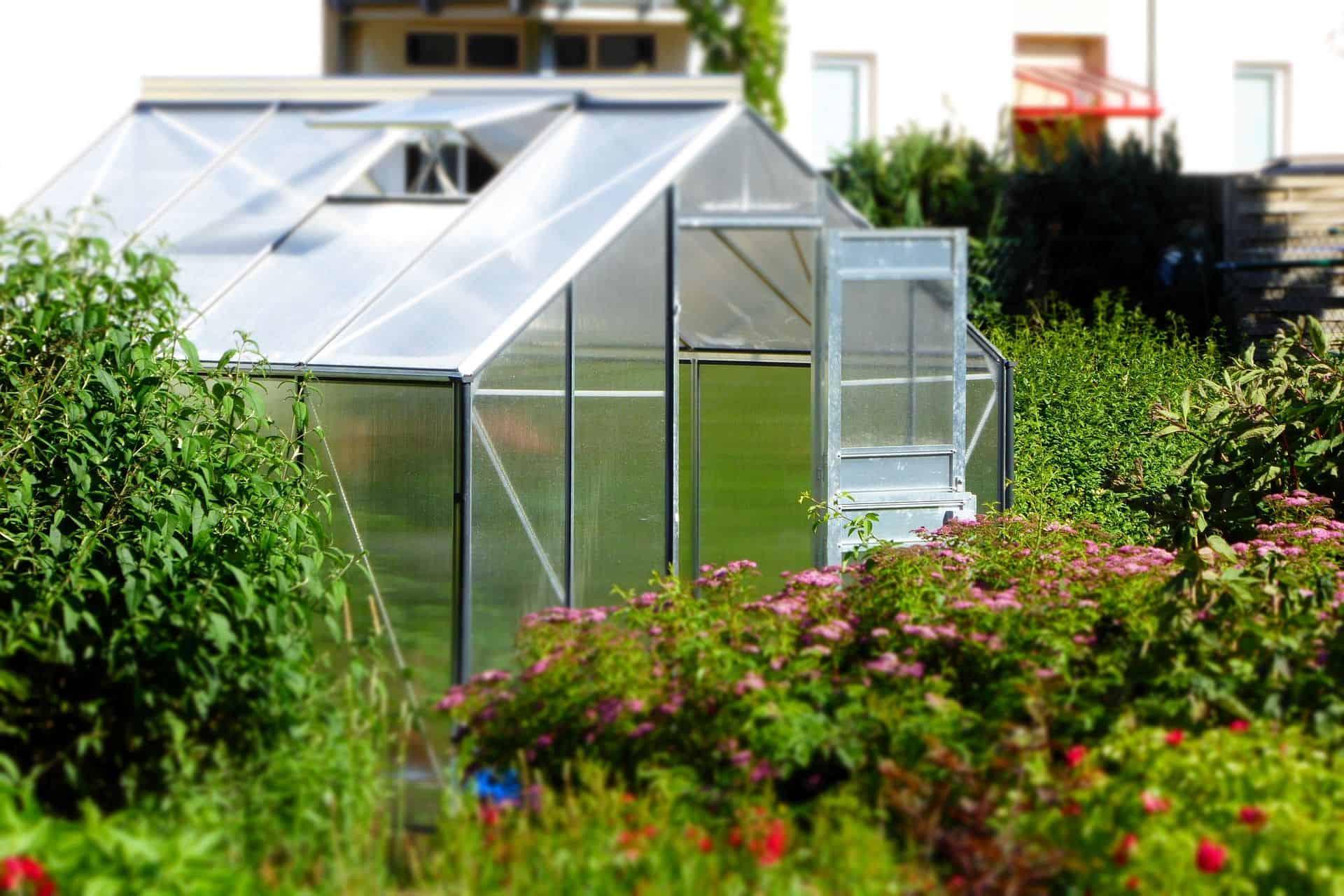die besten pflanzen f r das gew chshaus nachgeharkt. Black Bedroom Furniture Sets. Home Design Ideas