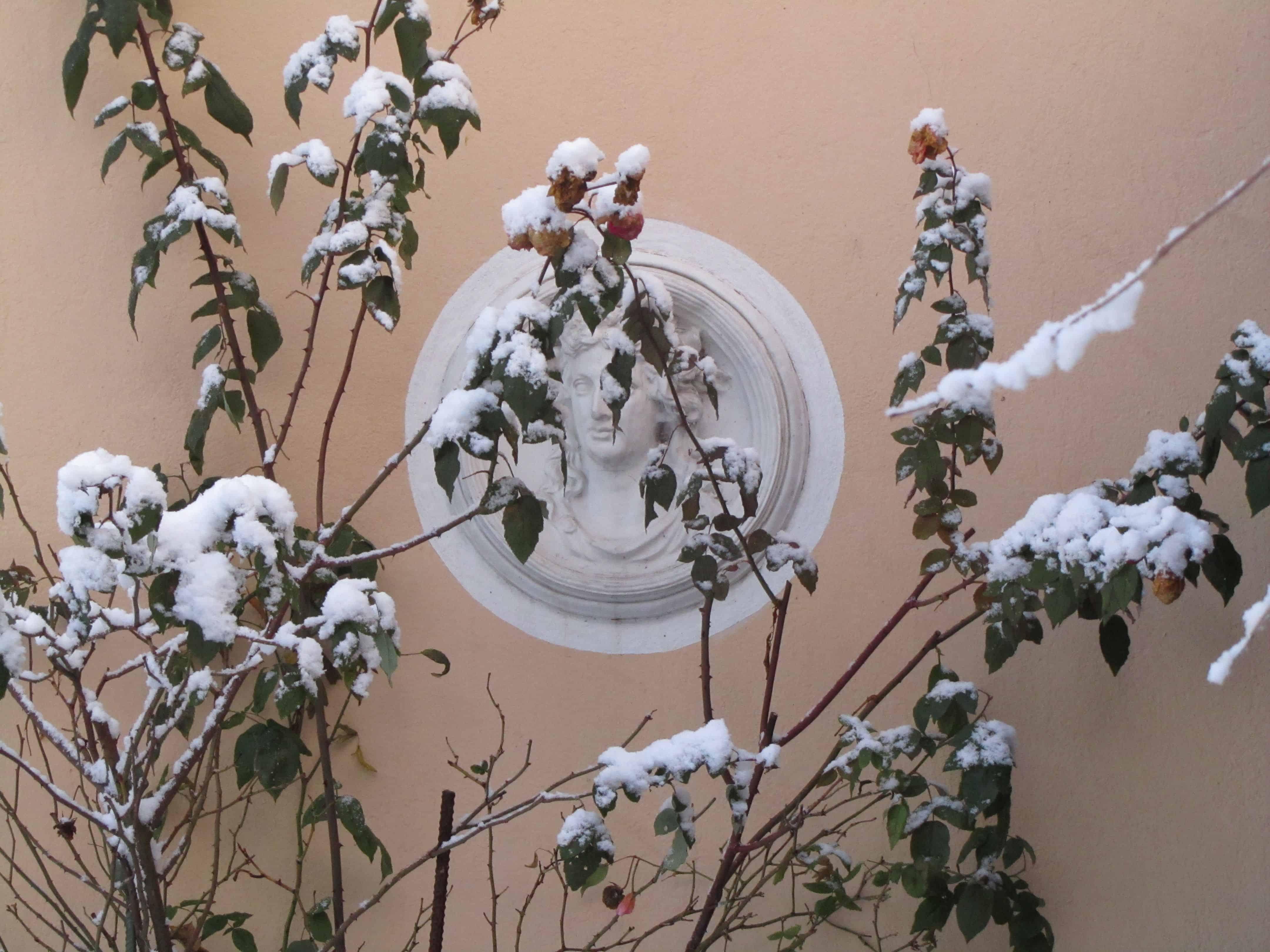 Read more about the article Der winterliche Garten – alles andere als eine Tristesse