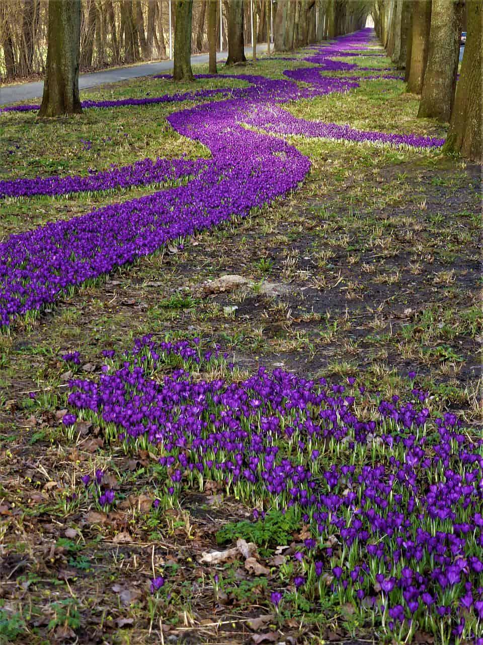 Bunte Blütenteppiche im Frühlingsgarten
