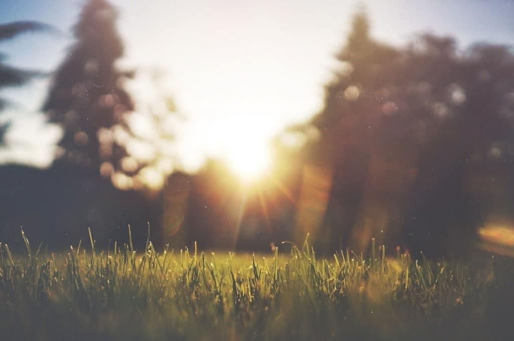 Rasen im Morgenlicht