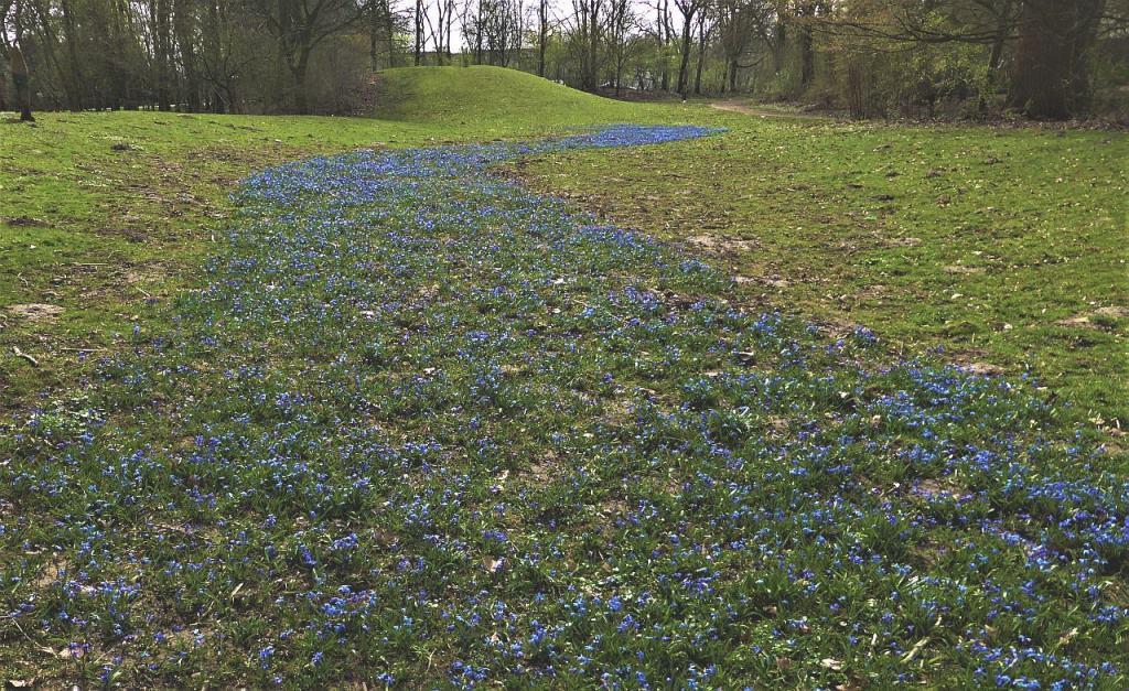 Blaue Scillia