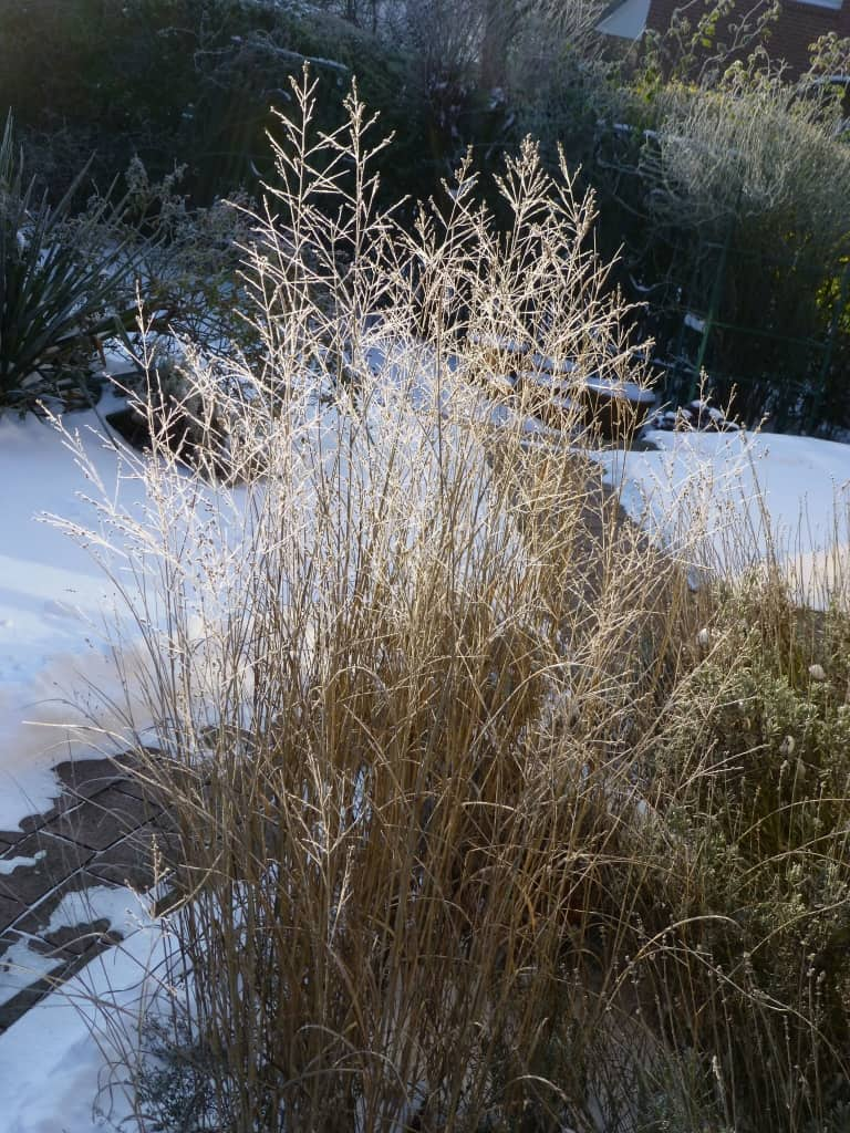 Schnee und Gräser in einem Garten